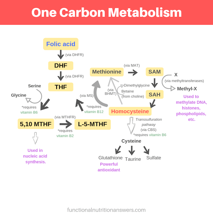 Diagram of One Carbon Metabolism - Functional Nutrition Answers