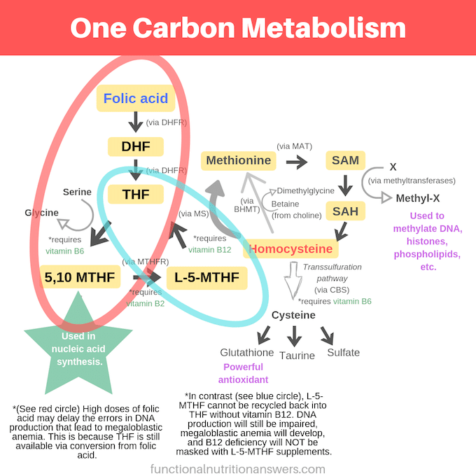 Diagram showing how folate and folic acid participate in one-carbon metabolism differently
