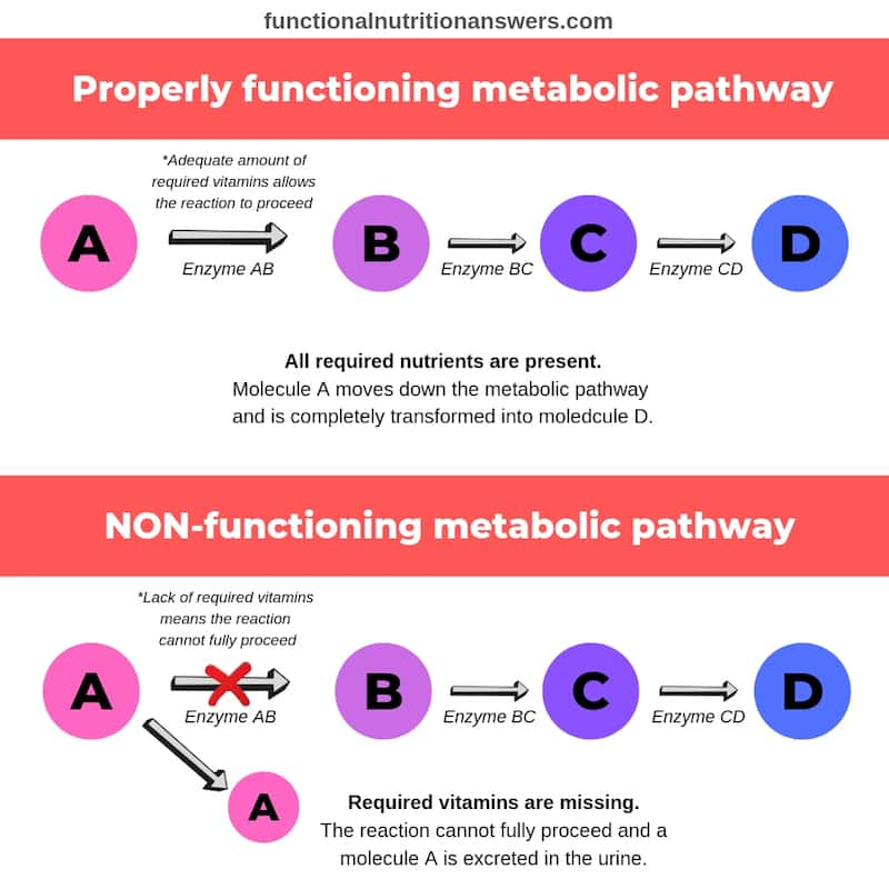Organic Acid Metabolism Visual Graphic